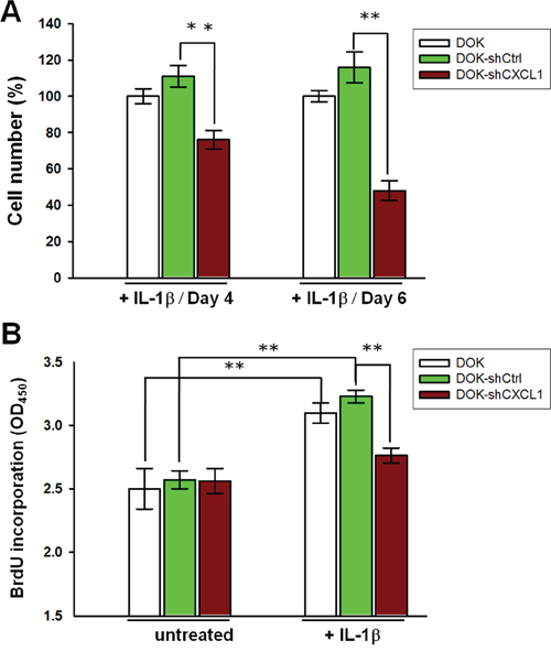 Knockdown of CXCL1 reduces IL-1β-mediated proliferation in DOK cell line.