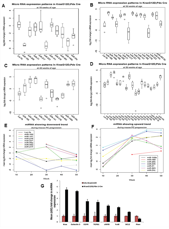 Expression profiles of miRNAs during the mouse PC progression in KrasG12D; Pdx1-Cre mice and their contemporary littermate animals.