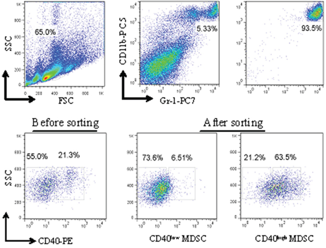 Isolation of CD40high and CD40low MDSC from MFC tumors by fluorescence-activated cell sorting (FACS).