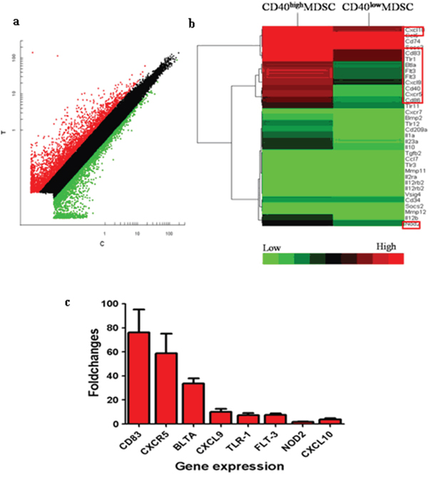 CD40high and CD40low MDSC presented distinct gene expression profiles.