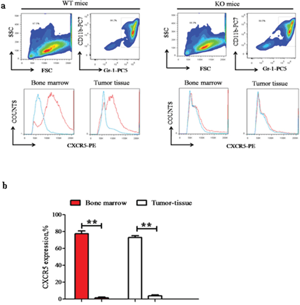 CD40 is essential for CXCR5 expression in MDSC.