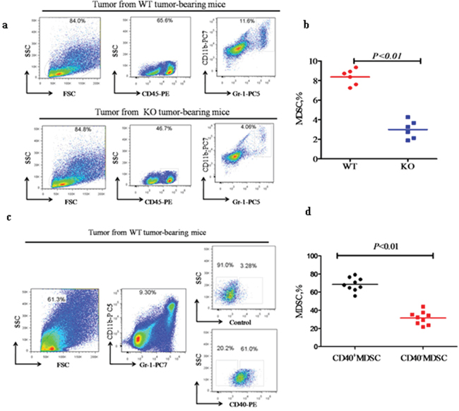 CD40 expression is associated with increased MDSC recruitment to tumor tissues.