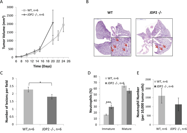 Host derived JDP2 expression inhibits tumor growth but promotes metastasis.