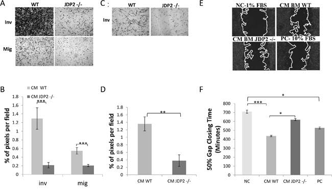 Conditioned medium of JDP2-expressing BMDCs promotes invasion and migration.