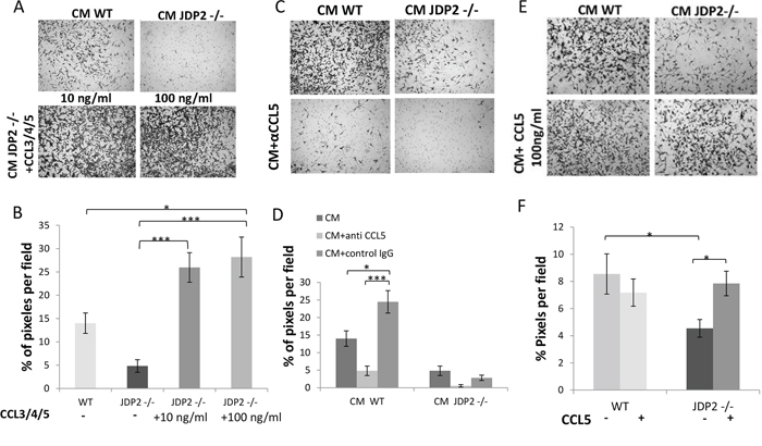 CCL5 is necessary and sufficient for increased LLC cell invasion.