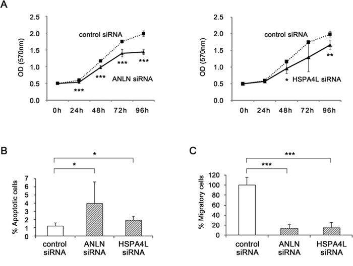Functional analyses by silencing of ANLN and HSPA4L.