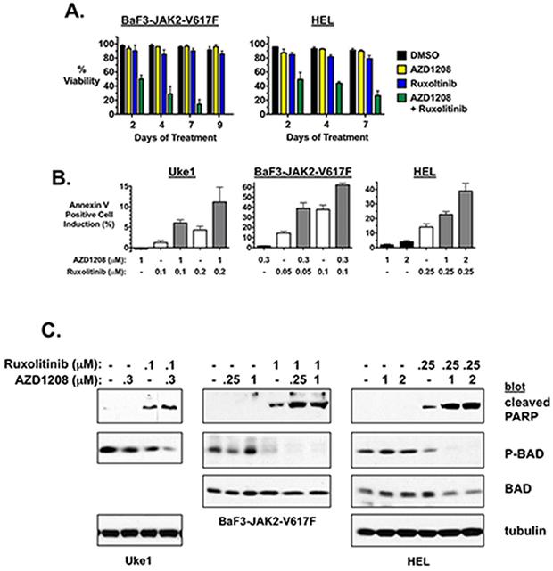 AZD1208 enhances apoptosis induced by ruxolitinib.