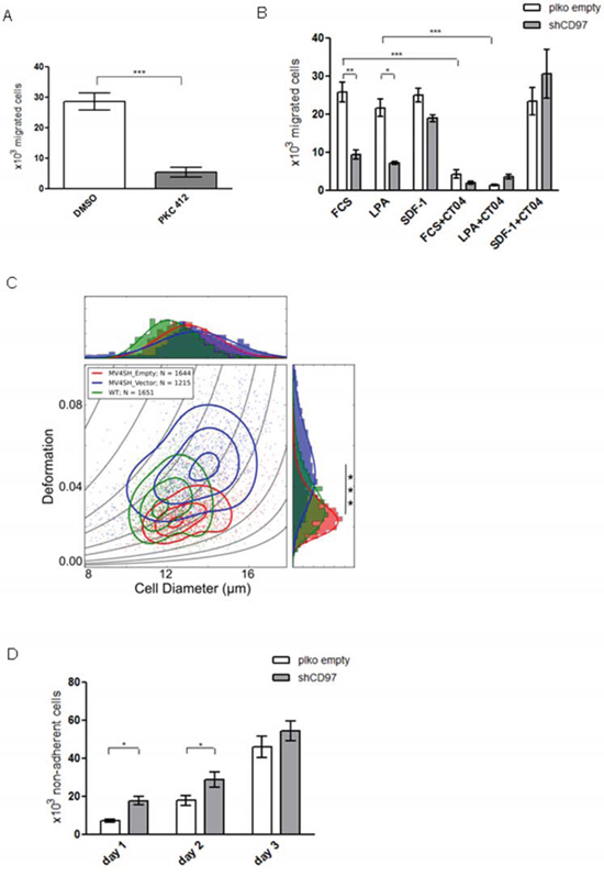 The migration, deformability and adhesion capacity of MV4-11 cells is modulated by CD97 knock down.