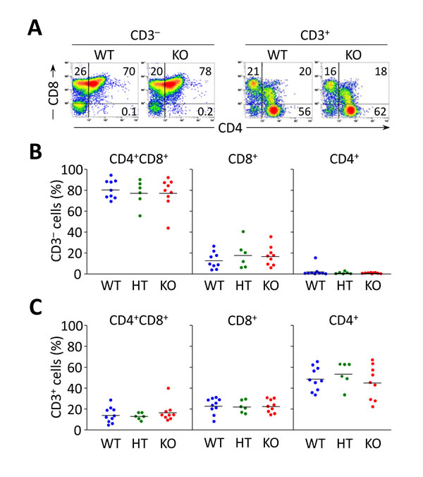 Flow cytometry analyses of thymocyte subsets in