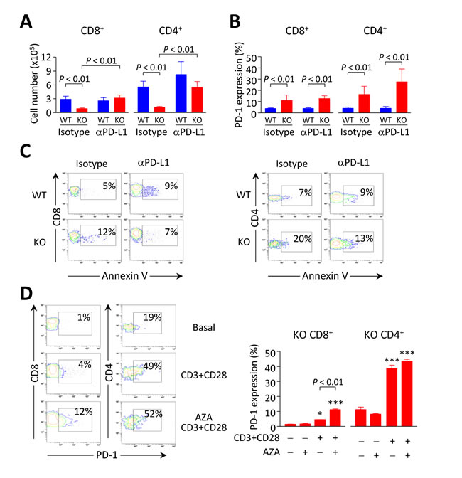 Breakdown of PD1/PD-L1 interaction contributes to accumulation of intrahepatic CD8