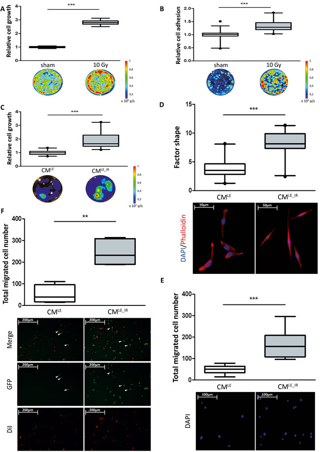 Impact of irradiated lung epithelial cells on breast cancer cell adhesion and growth.