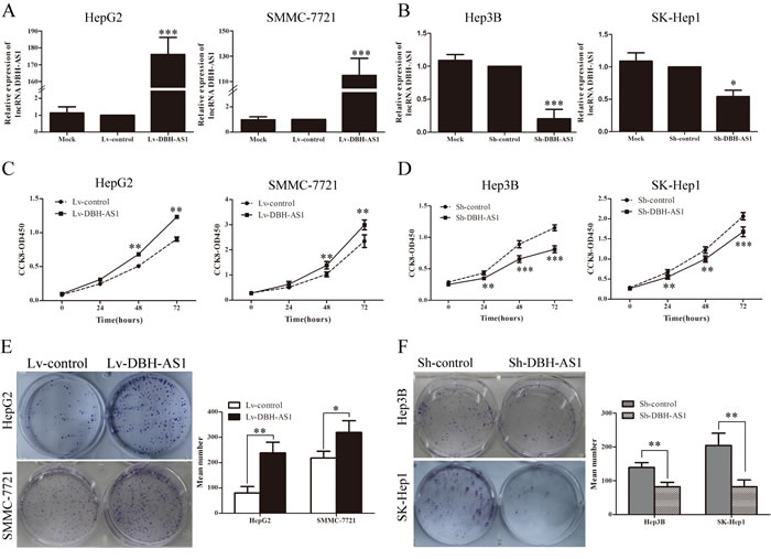 LncRNA DBH-AS1 promotes HCC cell proliferation