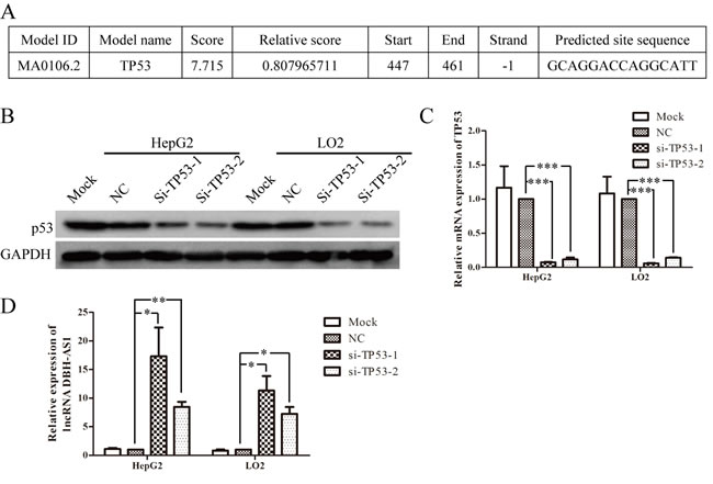 LncRNA DBH-AS1 is inactivated by p53.