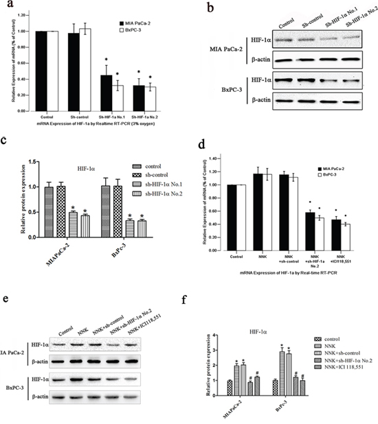 NNK induces HIF-1α protein upregulation in pancreatic cancer cells in vitro.