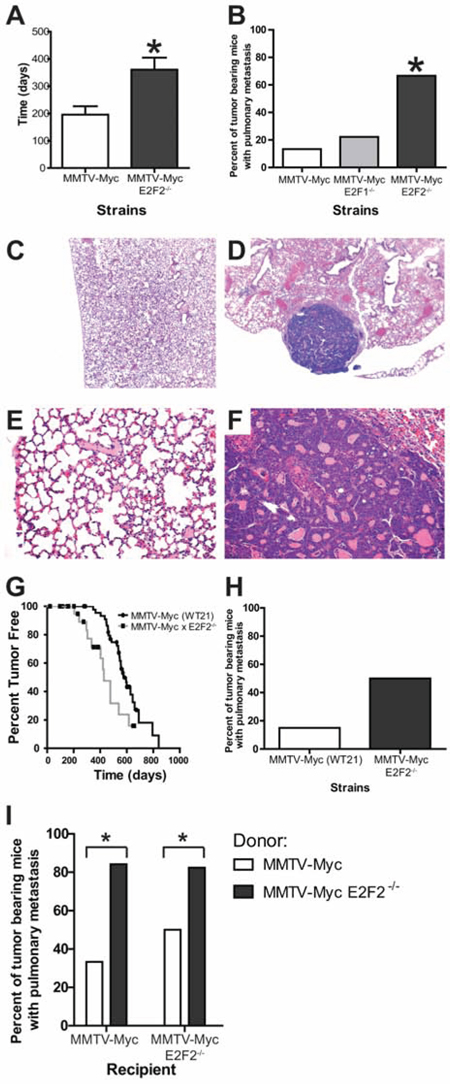 E2F2 loss induces metastasis in Myc driven tumors.