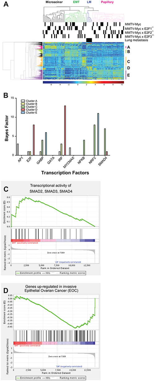 Gene expression alterations associated with lung metastasis.