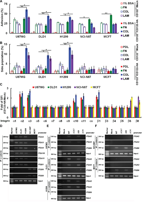 CD133 activity to maintain CSC properties depend on cancer type-specific integrin/ECM signaling.
