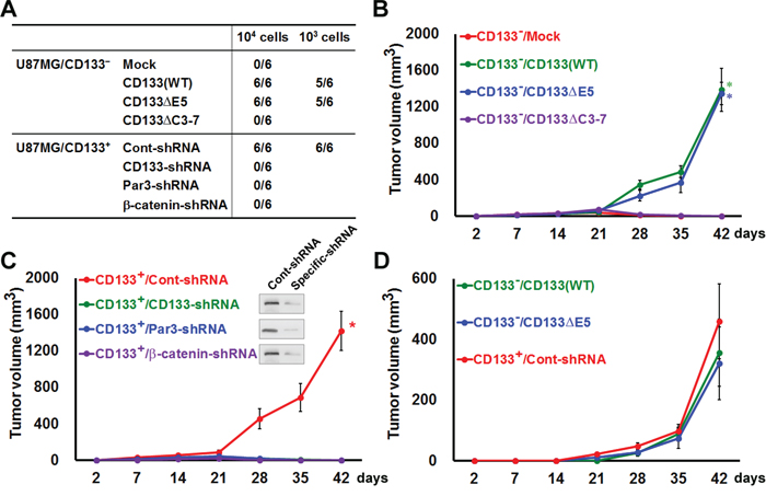 Expression and polarization of CD133 enhances tumorigenesis in an experimental animal model.