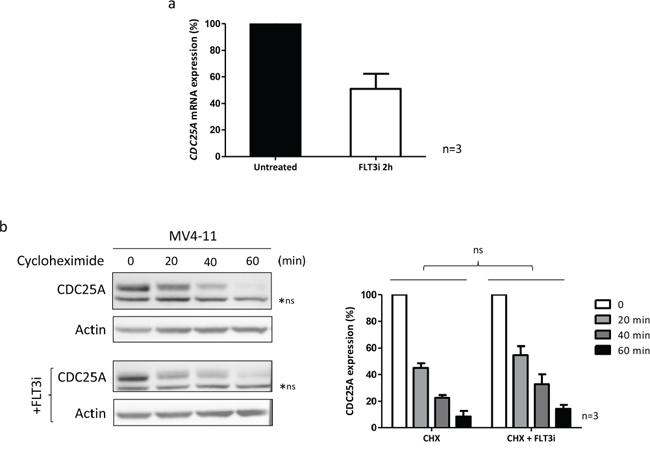 FLT3-ITD regulates CDC25A mRNA level.