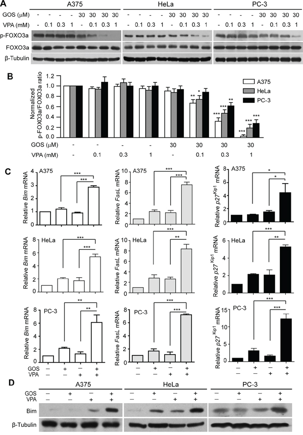 GOS and VPA co-treatment induced dephosphorylation of FOXO3a and expression of its target genes.