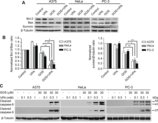 GOS and VPA co-treatment decreased the ratios of Bcl-2/Bax expression and induced caspase-8/-9 activation.