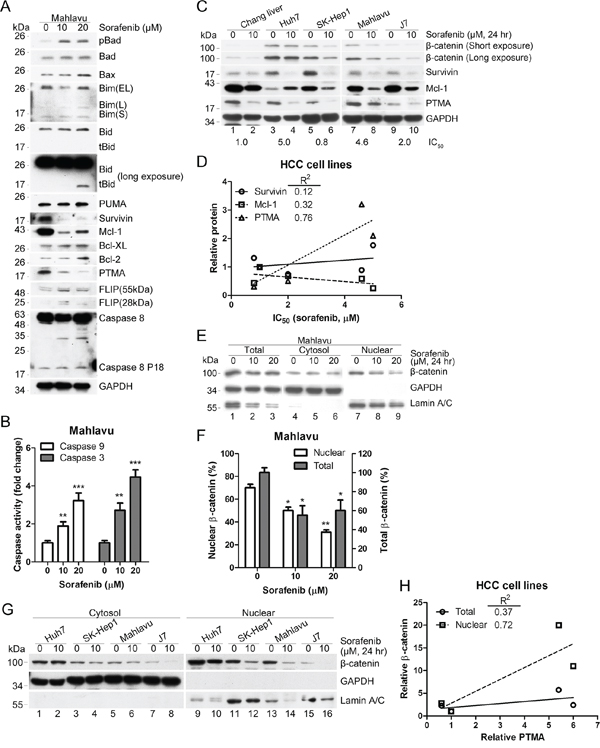 Sorafenib inhibits β-catenin levels and induces mitochondrial apoptotic pathways.