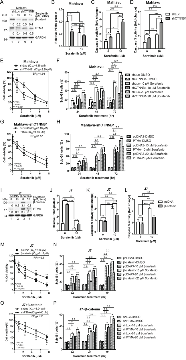 β-catenin silencing down-regulates PTMA protein level and potentiates sorafenib-induced cell death in HCC cells.