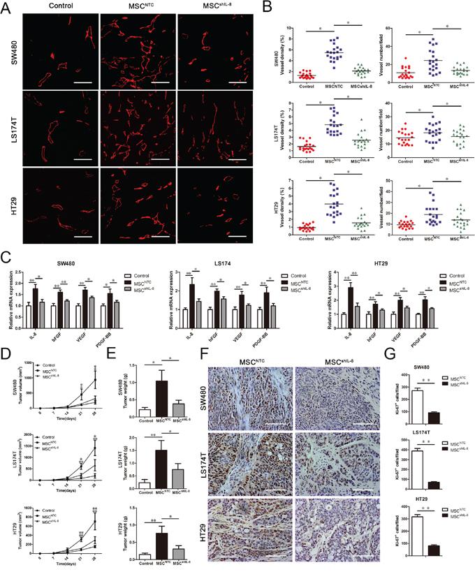 MSCs promote tumor angiogenesis and growth in vivo.