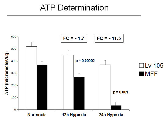 Fibroblasts over-expressing MFF show decreased ATP levels.