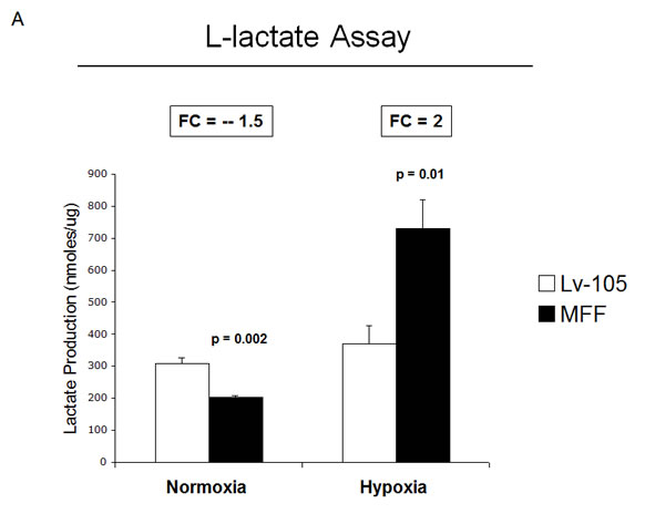 Fibroblasts over-expressing MFF show increased L-lactate generation and MCT4 expression, under hypoxia.