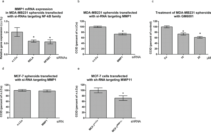 MMP1 expression is stimulated by NF-κB and contributes to CCID formation.
