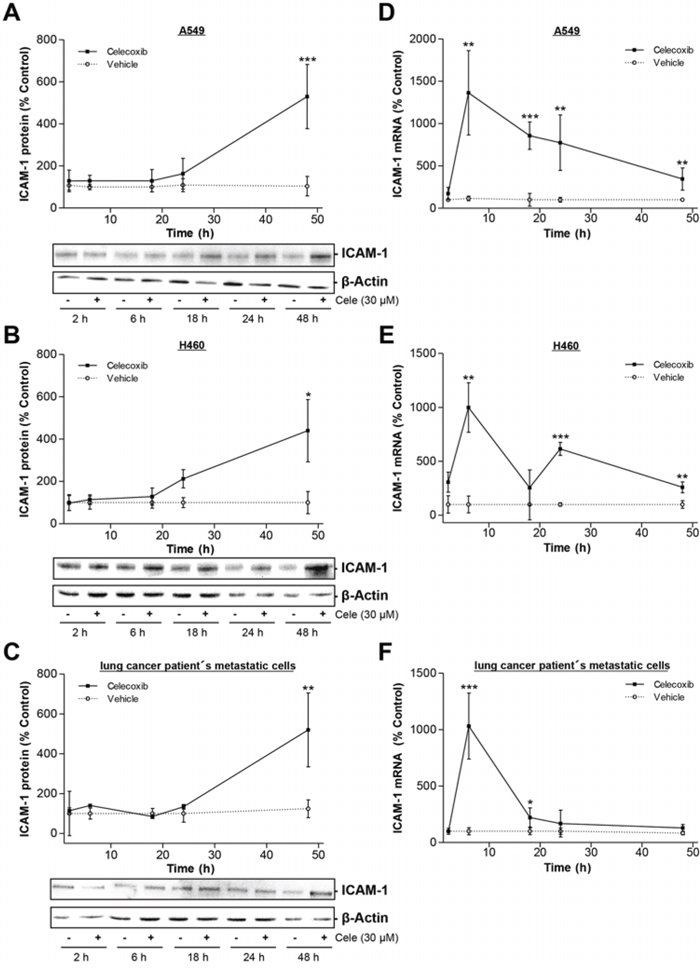 Time-dependent impact of celecoxib on ICAM-1 expression in A549, H460 and lung cancer patient's metastatic cells.