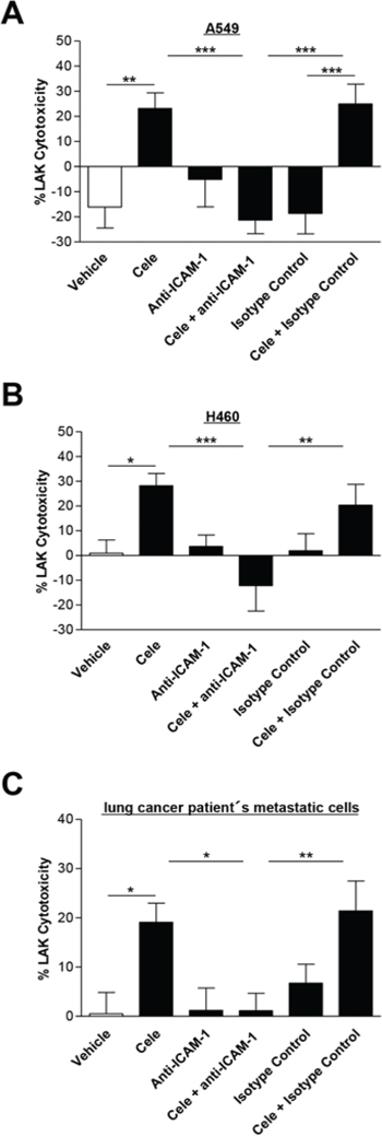 Effect of a neutralizing ICAM-1 antibody on cytotoxic lysis of cancer cells by LAK cells.