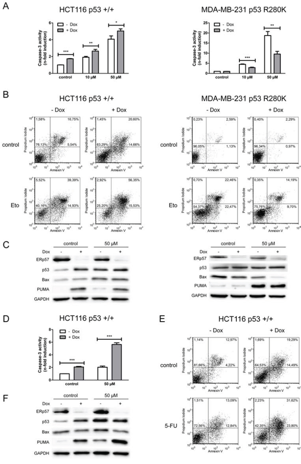 ERp57 modulates chemotherapy-induced apoptosis in a cell-type specific manner.