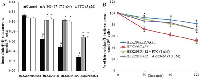 Effect of A-803467 on the accumulation and efflux of [3H]-MX in ABCG2-expressing cells.