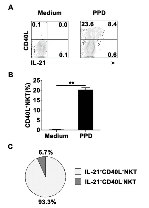 The expression of CD40L on IL-21- expressing NKT cells PFMCs were stimulated for 6 hrs with or without PPD plus anti-CD28.