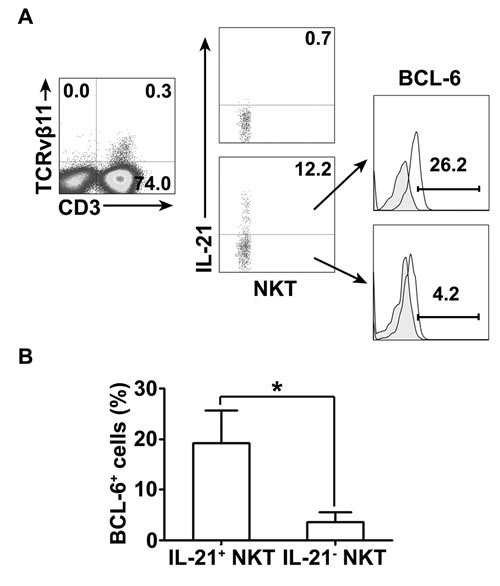 The expression of BCL-6 and IL-21 by NKT cells PFMCs were stimulated for 6 hrs with or without PPD plus anti-CD28.