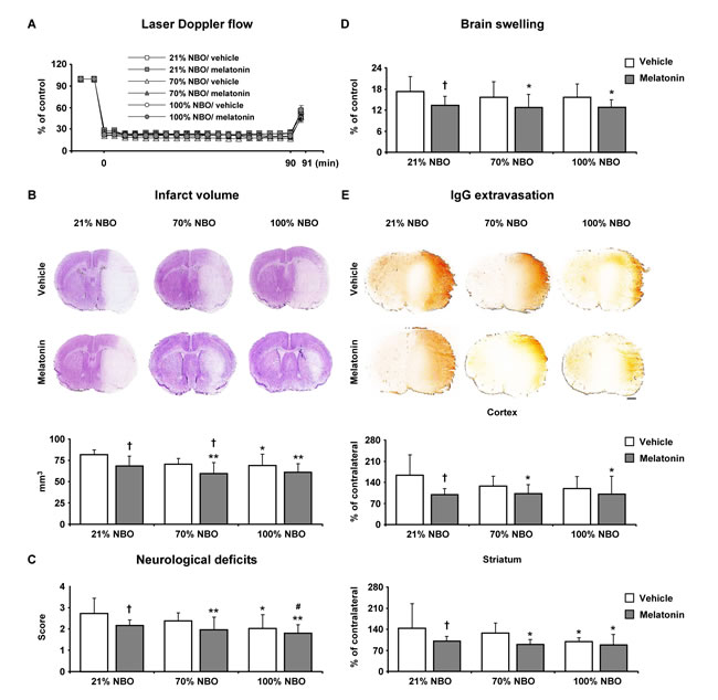 Effects of normobaric oxygen and melatonin exposure on neurological deficits, infarct volume, brain swelling and blood-brain barrier permeability.