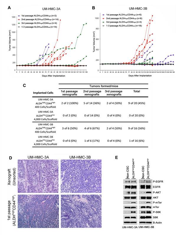 Tumorigenic potential of low passage mucoepidermoid carcinoma cells sorted for ALDH/CD44.