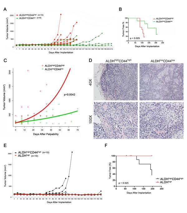 Tumorigenic potential of high passage mucoepidermoid carcinoma cells sorted for ALDH/CD44.