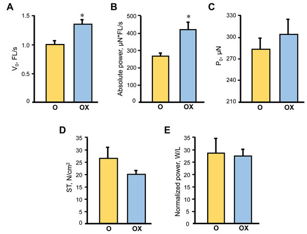 Single muscle fibre contractile properties in aged XJB-treated (OX) and untreated (O) rats.