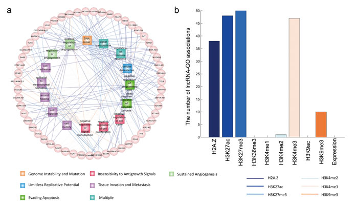 The predicted functions of cancer-associated lncRNAs.