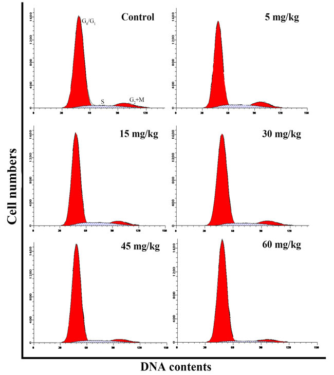 Changes of cell cycle in the thymus by flow cytometry at 42 days of age.