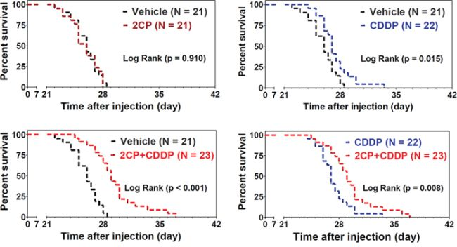 Combination of 2CP with CDDP prolongs the survival time of the experimental animals.