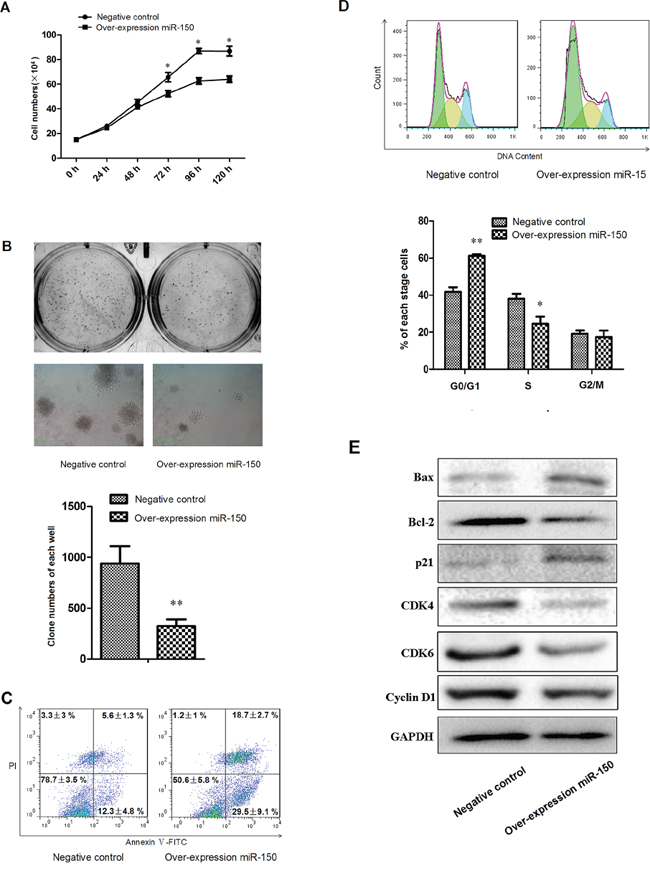 miR-150 suppresses the proliferation of K562 cells.