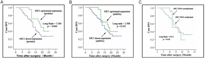 Correlation of HIC1 expression level and its methylated status with survival of ESCC patients.