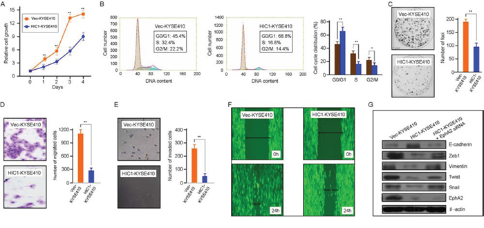 Tumor-suppressive function of HIC1 in ESCC cells.