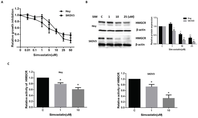 Simvastatin inhibited the growth of ovarian cancer cells and HMGCR activity.