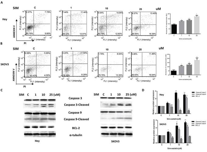 Simvastatin increased apoptosis in ovarian cancer cells.