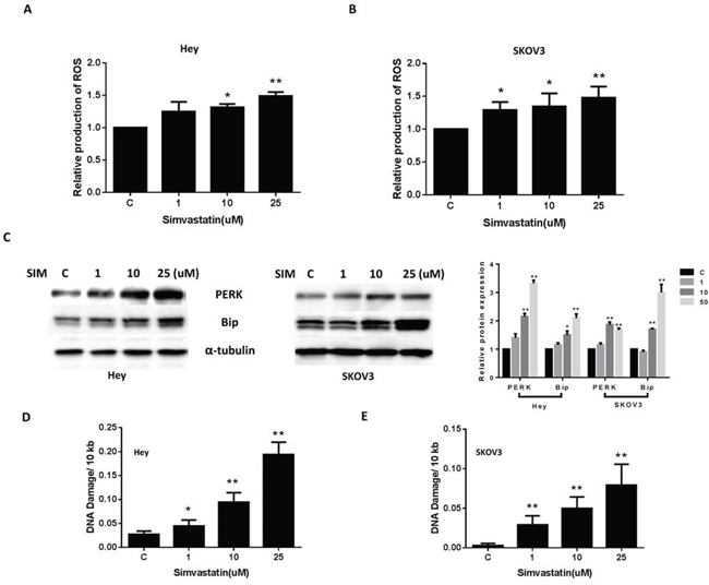 Simvastatin caused cellular stress and DNA damage in ovarian cancer cells.